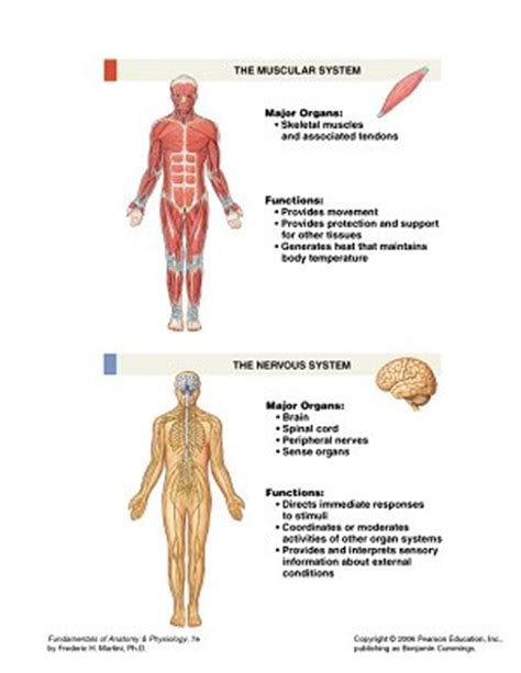 Essay Questions On Endocrine System